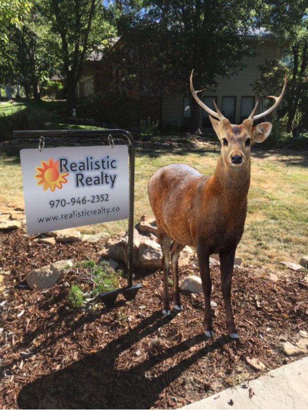 The Buck Stops at Realistic Realty Colorado